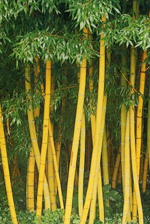 Komunitas Cinta Bambu Bambu Indonesia